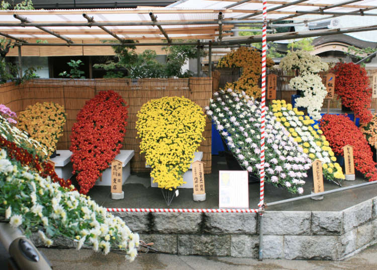The Bunkyo Chrysanthemum Festival