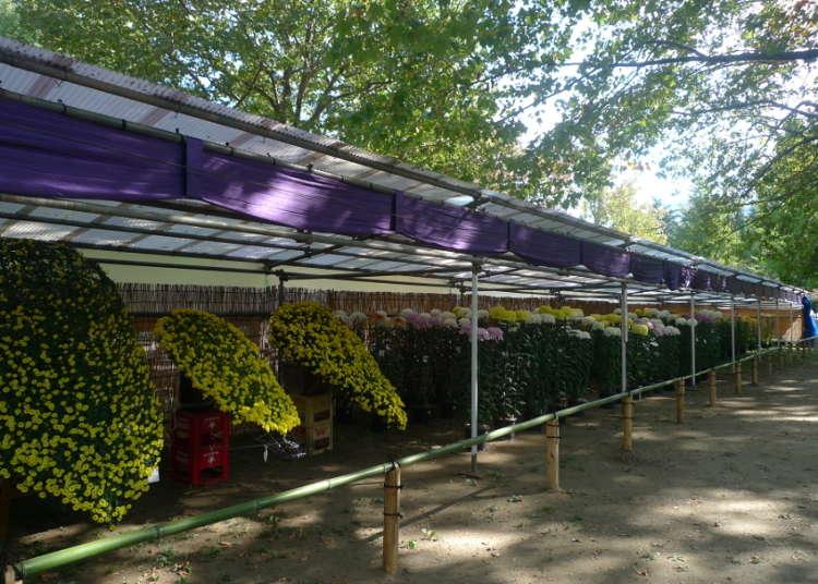 The Tokyo Metropolitan Tourism Chrysanthemum Exhibition