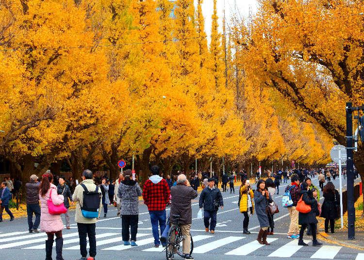 도쿄&근교의 단풍 구경 명소 7선