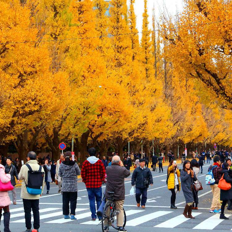 精选7处东京&近郊的红叶景点