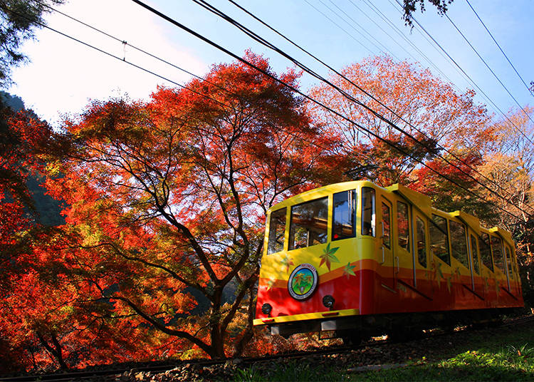Mount Takao: Through a Colorful Tunnel
