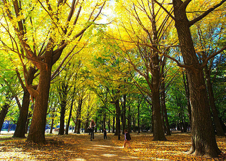 Yoyogi Park: A Colorful Contrast of Yellow and Red