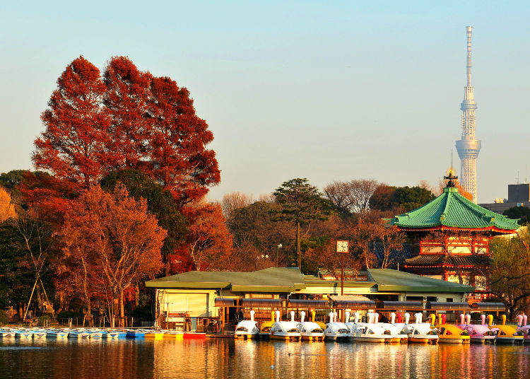 Ueno Park: A Spacious Grove of Autumn Leaves