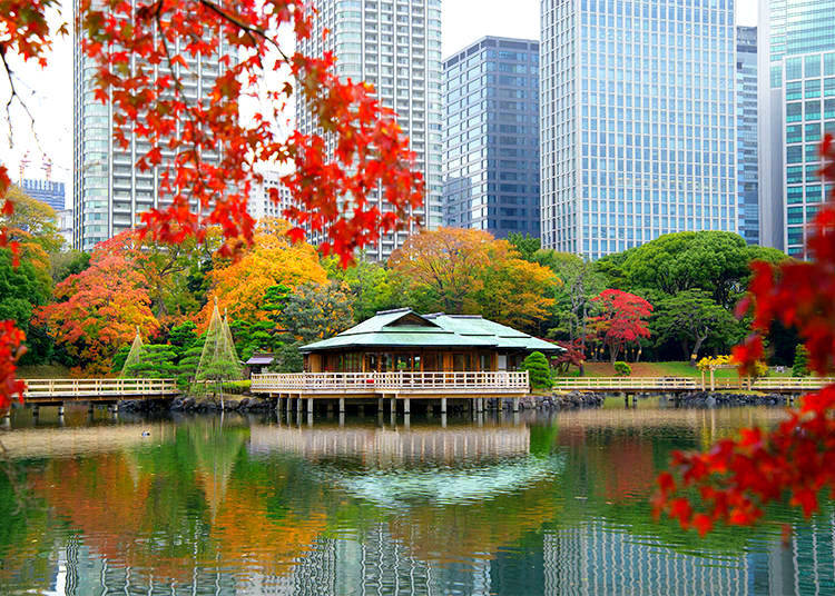 Hamarikyu Gardens: Harmony between Nature and High-Rise Buildings