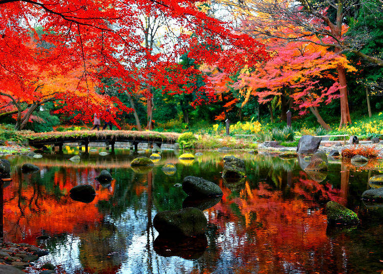 Koishikawa Korakuen Gardens: An Exceptional and Traditional Autumn Scenery