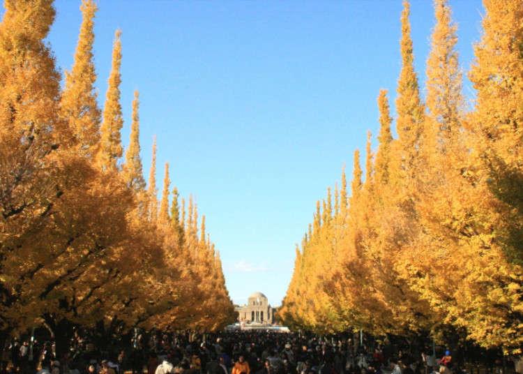 300m続く黄金色のイチョウ並木