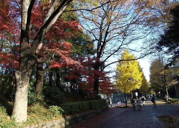 広大な敷地で色とりどりの紅葉を楽しむ