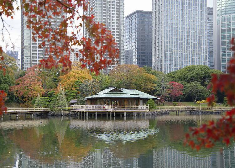 高層ビル群の中に映える美しい紅葉