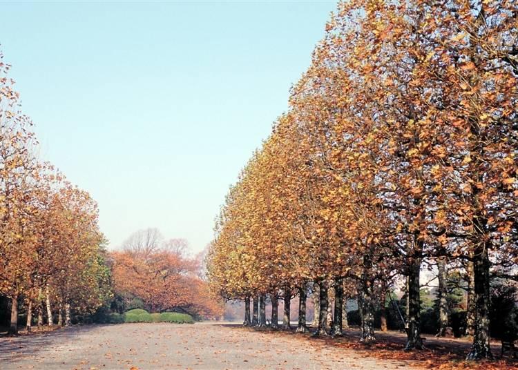3つの異なる庭園で楽しむ紅葉