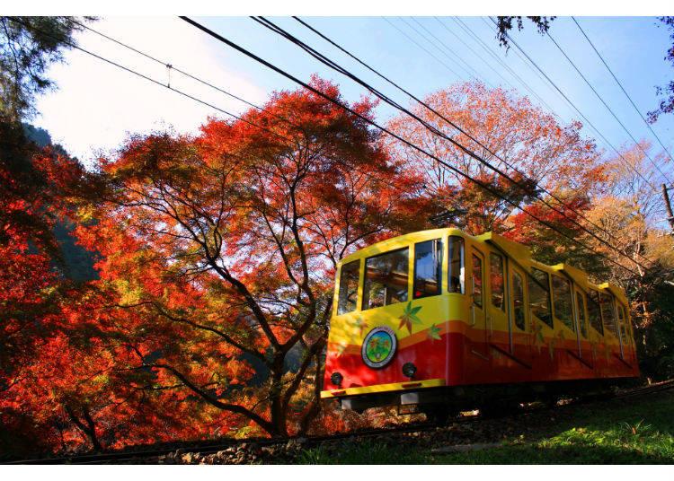 鮮やかな紅葉のトンネル