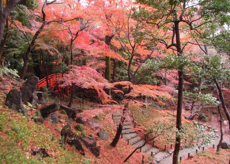 从渡月桥眺望的枫红美景格外漂亮