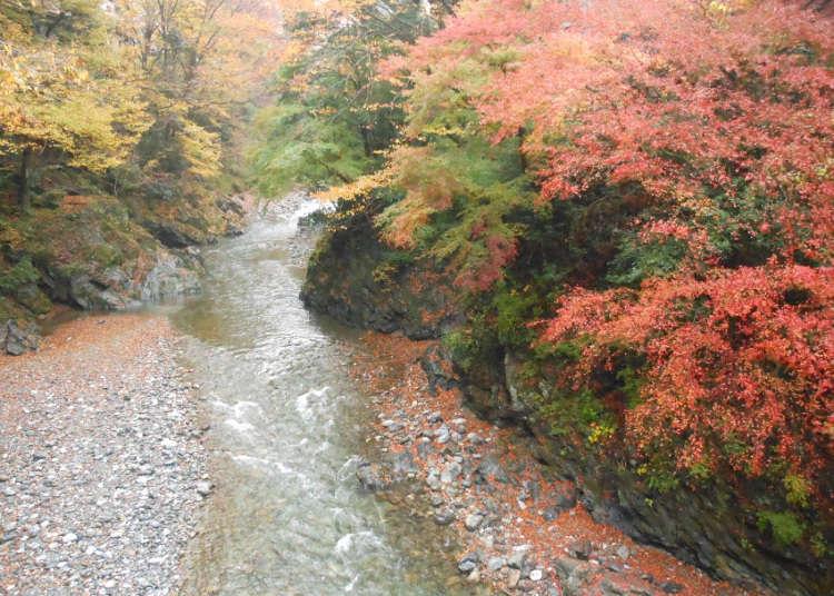 欣赏清流与红叶的自然步道
