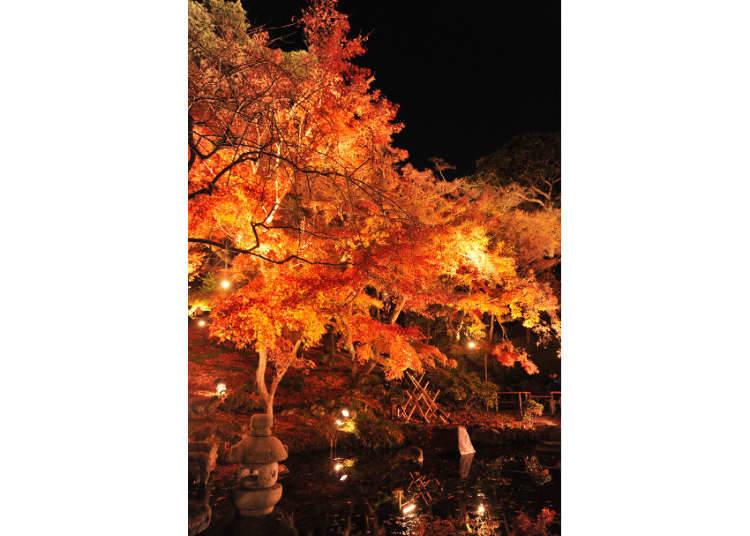 紅葉季節必去的古寺巡禮