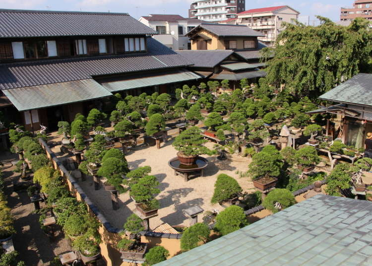Here's Where to See Bonsai in Japan
