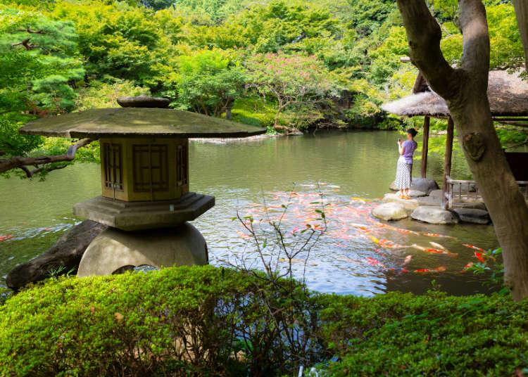 拥有美丽日本庭园的八芳园