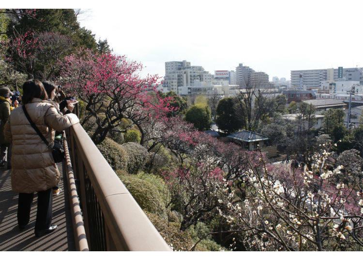 Ikegami Plum Garden