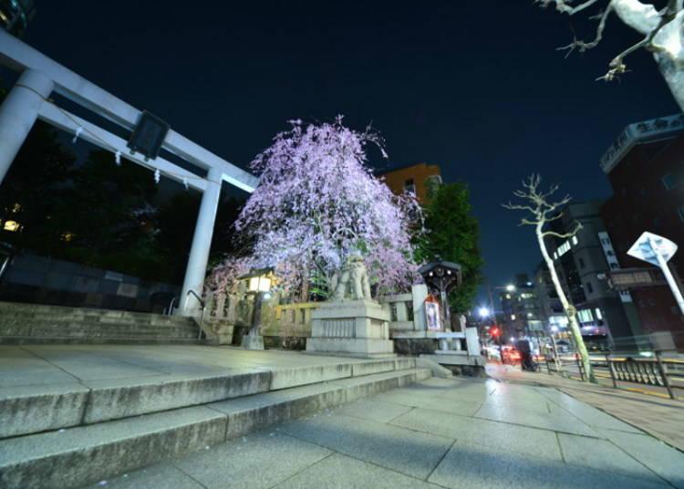 結婚式と非日常の空間:今日(こんにち)の乃木神社