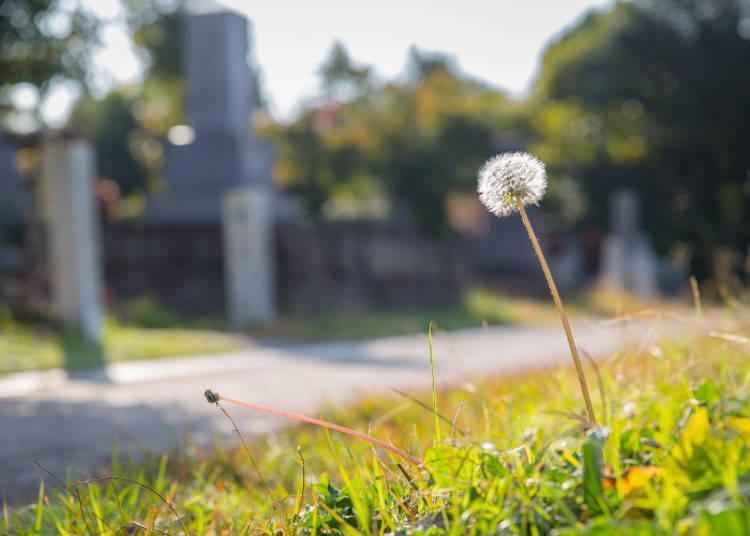 意外な歴史散歩ができる青山墓地