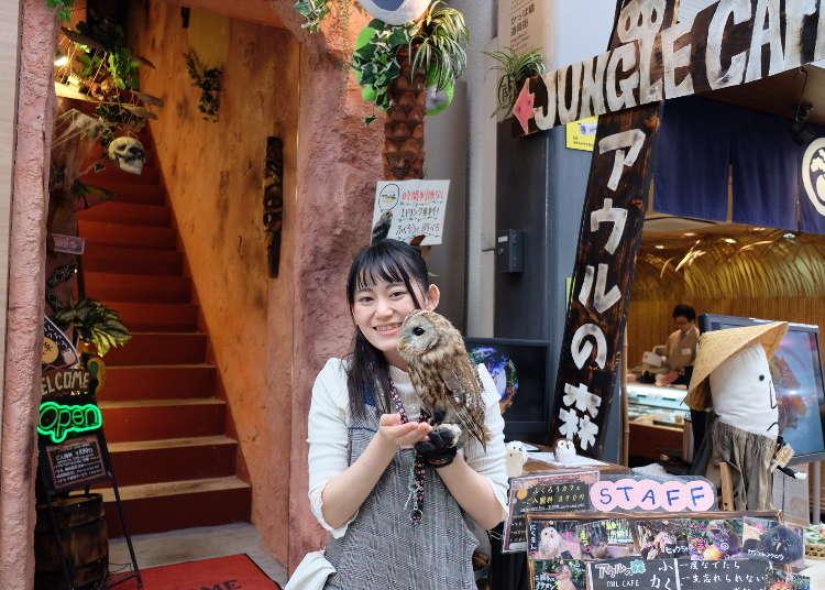 Wajib Bagi Penggemar Burung Hantu! Sisi Liar Asakusa yang Anda Belum Tahu, Kafe Burung Hantu