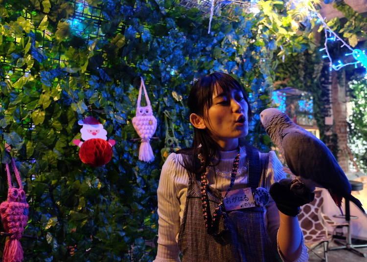 Tak Hanya Burung Hantu yang Ada di Hutan