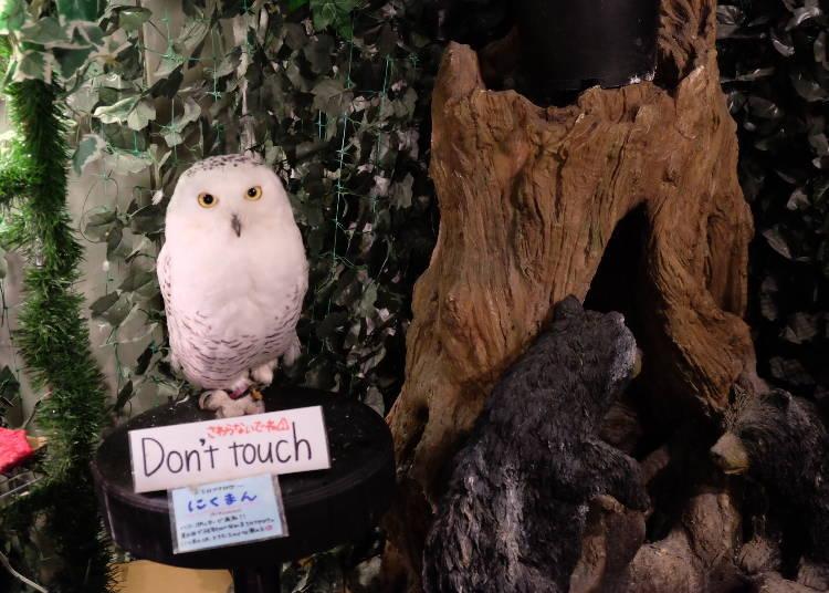 Bertemu dengan [Hedwig]!