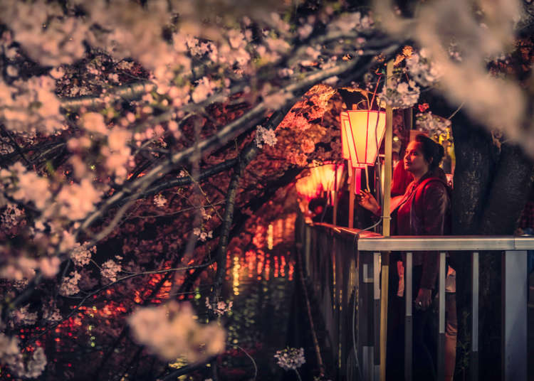 Cherry Blossoms in Japan: All About Sakura and Hanami