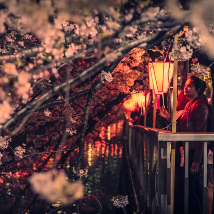桜と花見のすべて