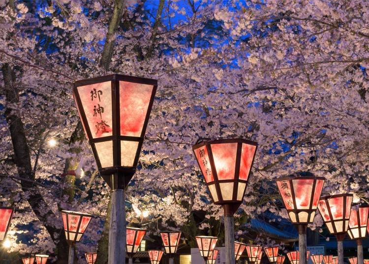 The Philosophy of Cherry Blossoms