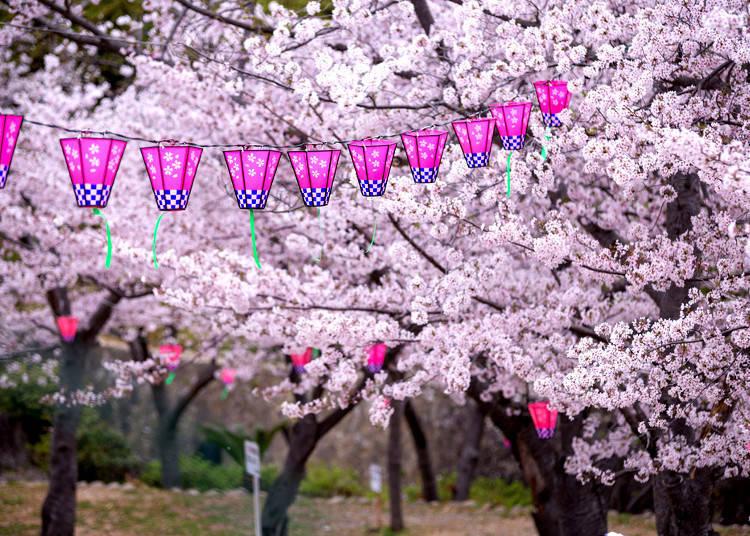 花見を最高に楽しむヒント