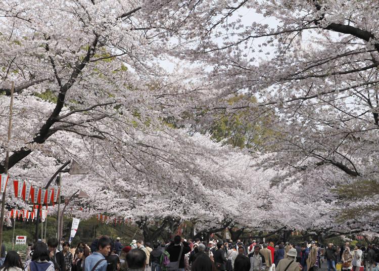 Ueno Onshi Park Area