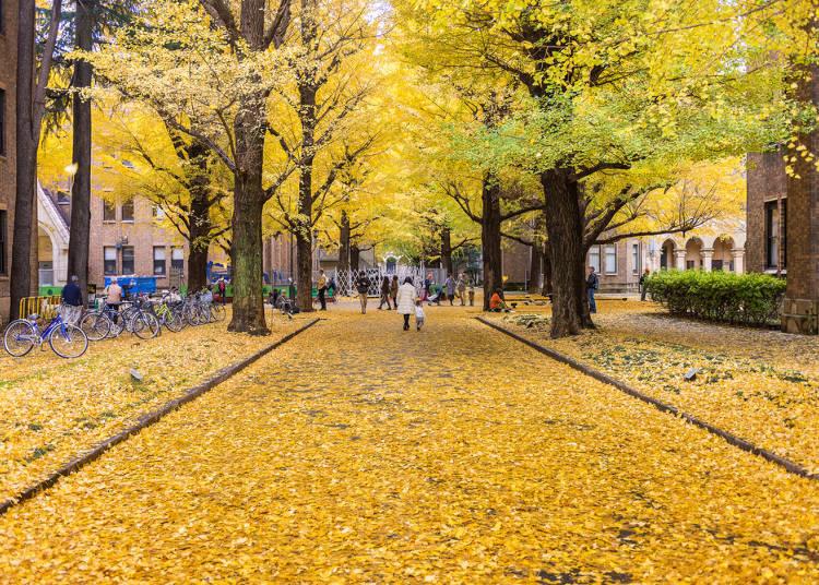 日本的「春樱夏祭秋枫冬雪」