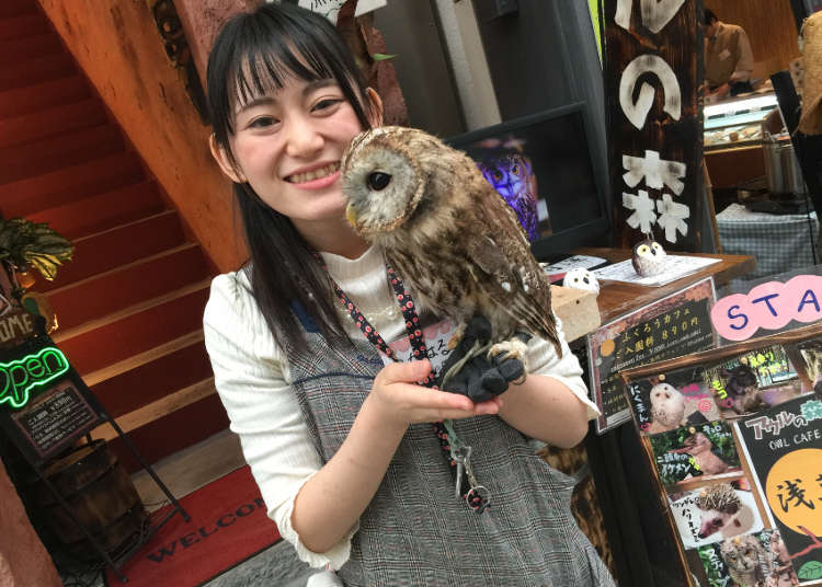 Asakusa's Hidden Feathery Jungle Forest: Owl no Mori
