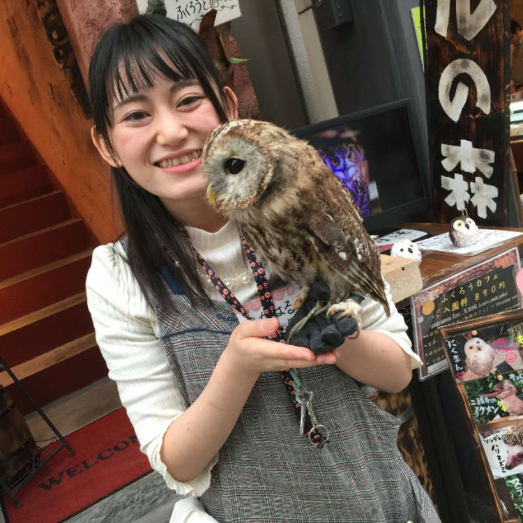 Asakusa's Feathery Jungle Forest: Owl no Mori