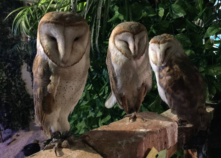 Along Come the Owl Cafes