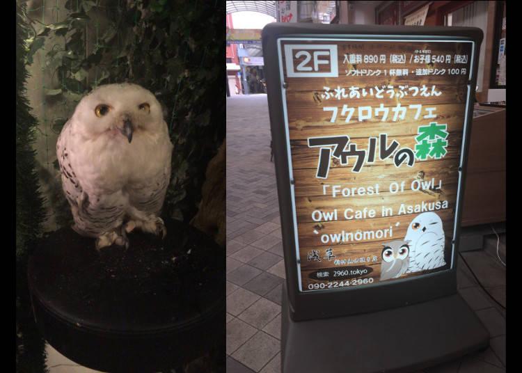 Along Come the Owl Cafes...Visiting Owl no Mori