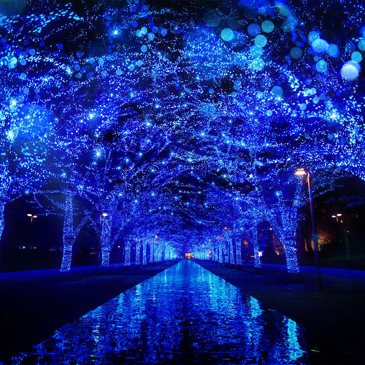[2017] Lighting Up the Winter: Tokyo's Top 6 Illumination Highlights