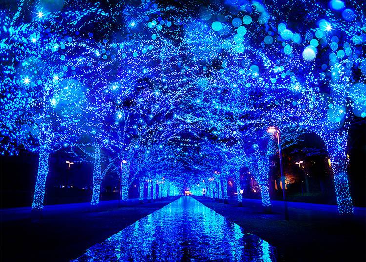Shibuya's Illuminations: Yoyogi Park Transforms into a Blue Cave