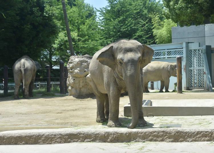 東園:大型動物たちがビッグスマイル