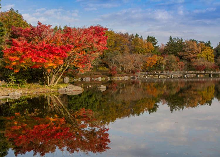 Showa Kinen Park – Tokyo's Largest Natural Park