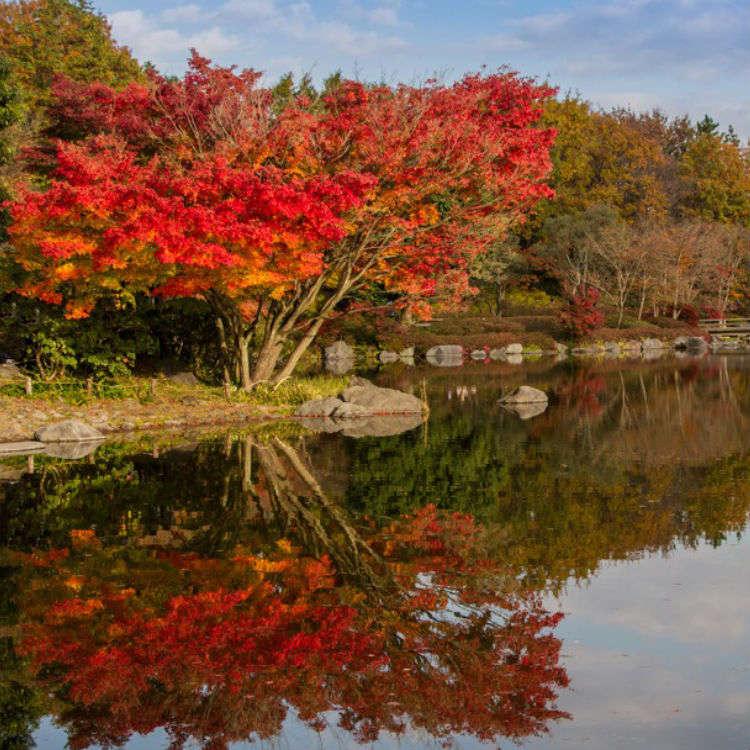 東京で最大級の自然公園 昭和記念公園