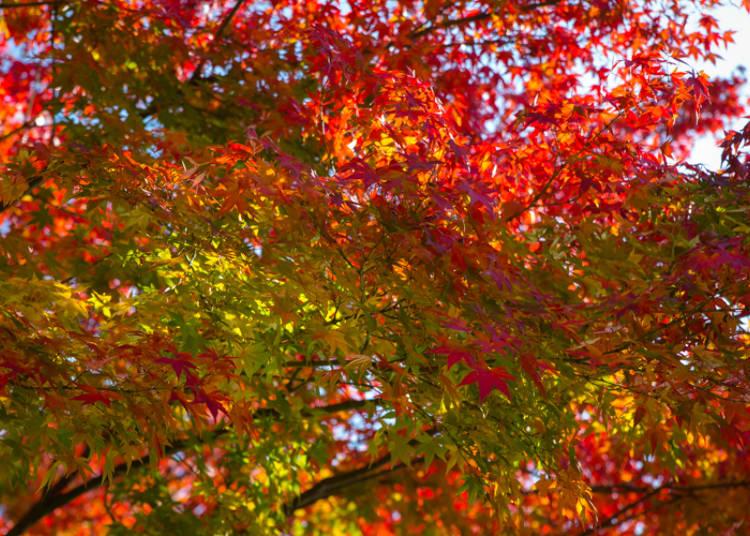 秋の美しい色彩