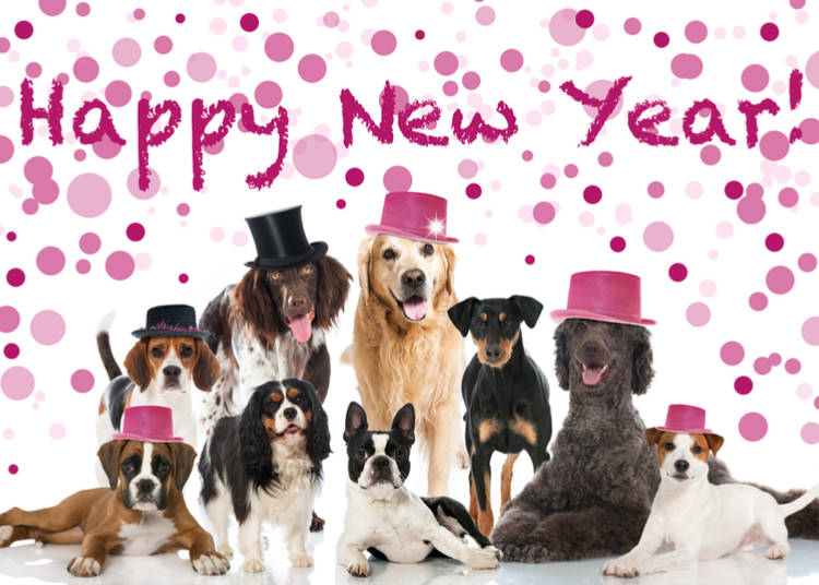 Quick Look at the Year of the Dog