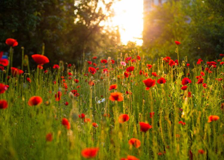 From Wildflowers to Ikebana