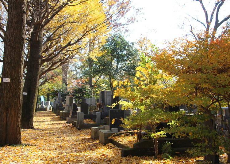 雑司ケ谷霊園の今と昔