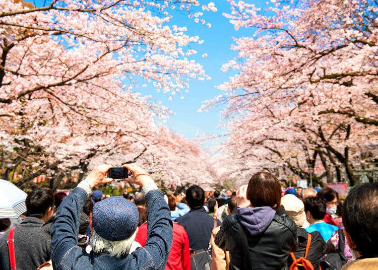 남들과 다른 벚꽃놀이! 도쿄의 숨어있는 벚꽃명소