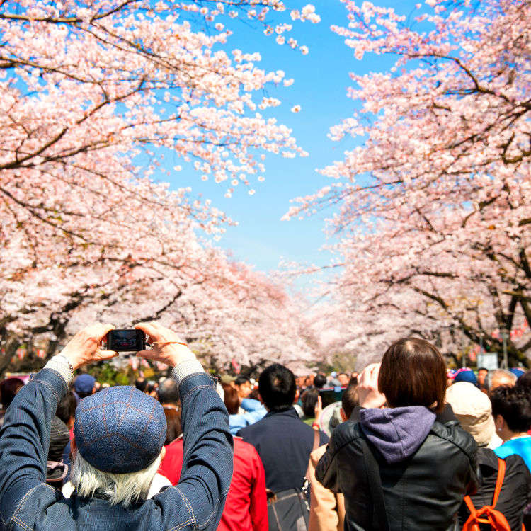 Japan's Cherry Blossoms – Secret Hanami Spots to Enjoy Spring Magic Without the Crowds