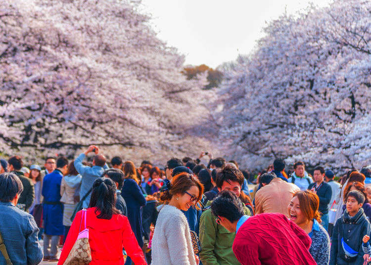 벚꽃놀이를 위한 필수 준비물! 과연 어떤 것이 있을까?
