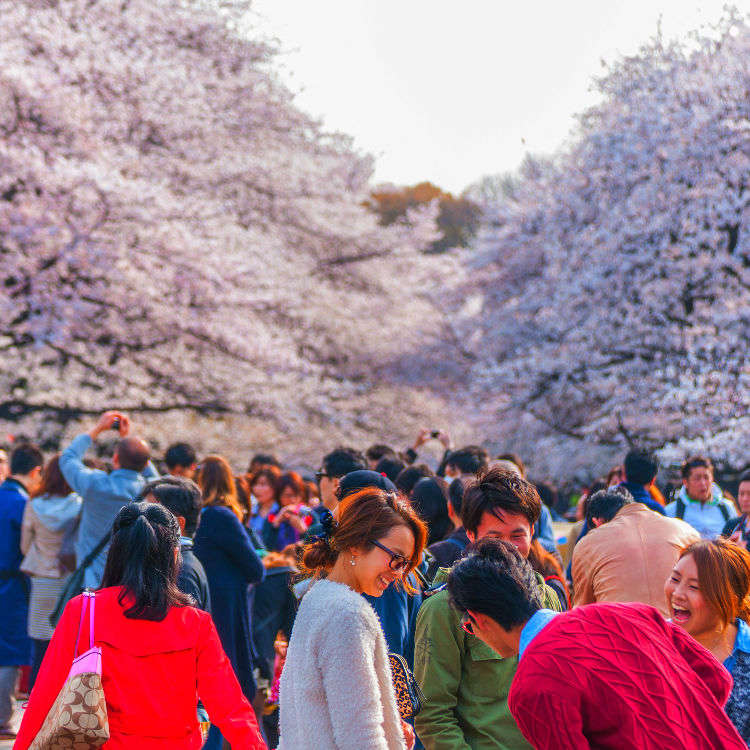 Hanami How-To: Tips for Enjoying Cherry Blossoms