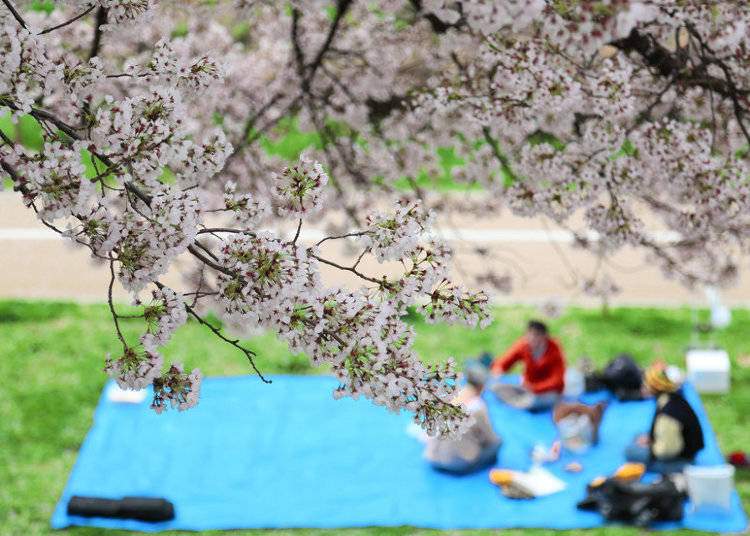 What to bring to a Hanami Party in Japan