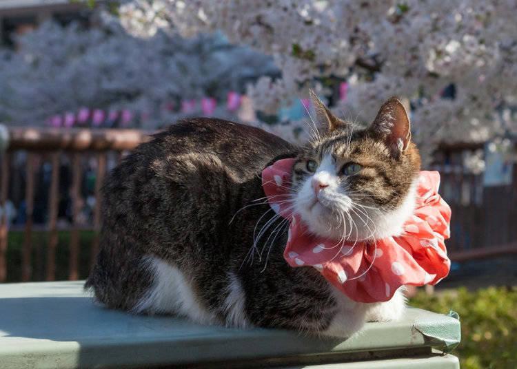 享受日本的賞櫻樂趣!